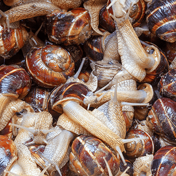 slakken-bestrijden