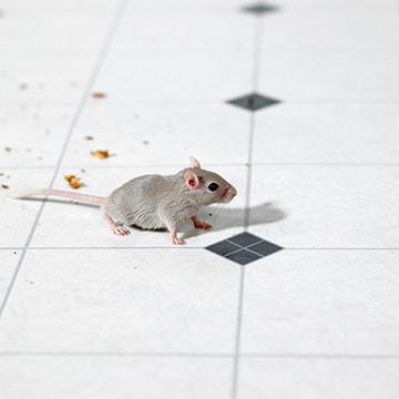 Muizen vangen