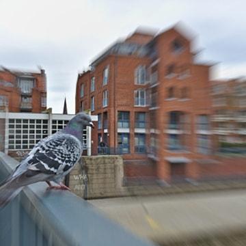 vogels vangen